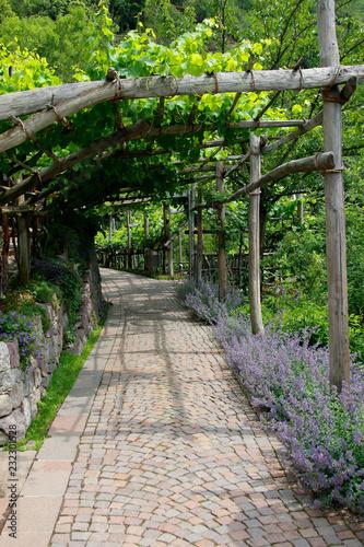 Tuinposter Spoorlijn Lauben-Weg mit Pflanzen