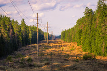 A Picturesque Forest Clearing With Power Poles Stretching Into The Distance