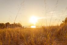 Sunlight Through Tall Grass Fo...