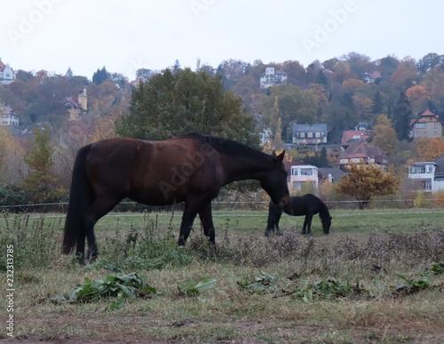 Fotografía  Reitpferde auf der Koppel