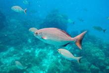 Beautiful Fish In Azure Water