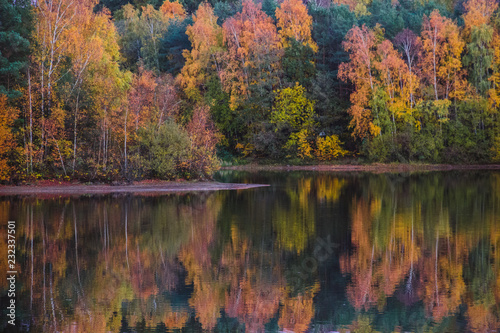 Poster Autumn Lake and tree scenery in autumn with reflections on calm surface. Trees in yellow and orange leafs.