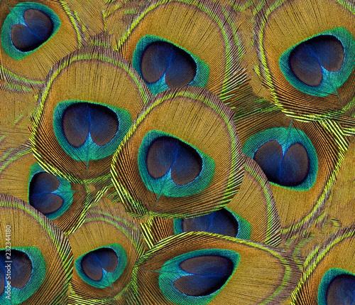 Photo sur Toile Les Textures Strukturen und Muster, Pfauenfeder