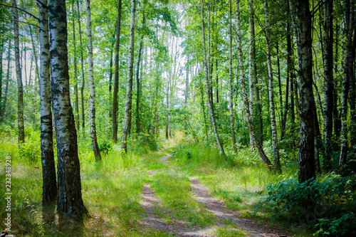 Foto op Canvas Weg in bos path in forest