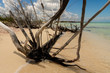 Beach of the Caribbean sea in Mexico with driftwood, shallow water and clouds