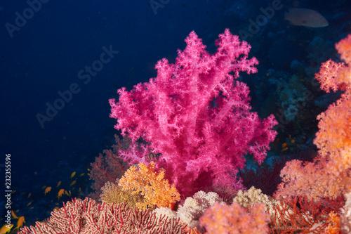 In de dag Koraalriffen Koralle
