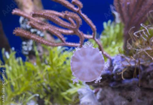 Fotografie, Obraz  Aquarium Creature
