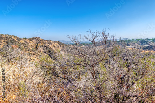 Staande foto Donkergrijs Dry brush in southwest forest of California