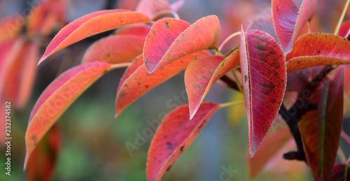 Wunderschöne Herbstlaubfärbung, Banner