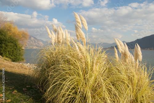 Fototapeta Sulle rive del lago d'Iseo