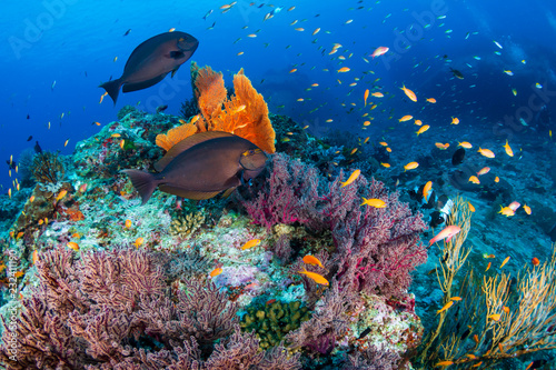 Fotomural  Schools of tropical fish swimming around a colorful, healthy tropical coral reef
