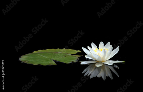 Foto op Aluminium Waterlelies Waterlily