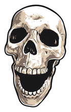 Human Skull With Mouth Open In...