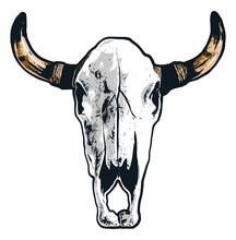 Realistic Steer Skull