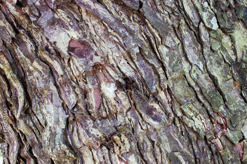 In de dag Olijfboom bark of an olive tree. nature. photo