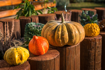 Fototapeta Decorative pumpkins in autumn garden