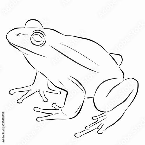 Naklejka premium ilustracja żaby, rysunek wektorowy
