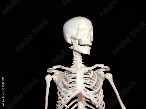 Some parts of human skeleton - Buy this stock photo and