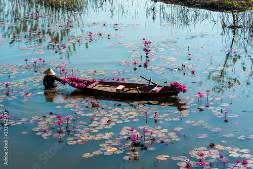 Fotomural Yen river with rowing boat harvesting waterlily in Ninh Binh, Vietnam