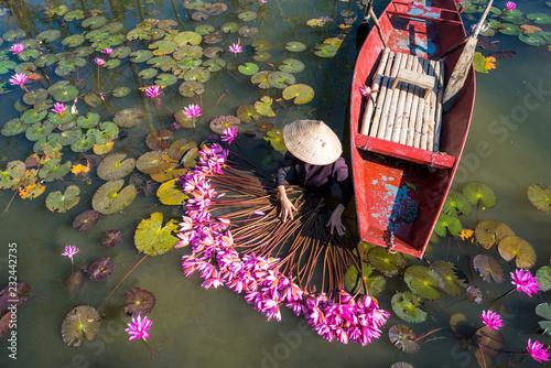 Poster de jardin Nénuphars Yen river with rowing boat harvesting waterlily in Ninh Binh, Vietnam