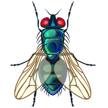 Vector Fly On White Background