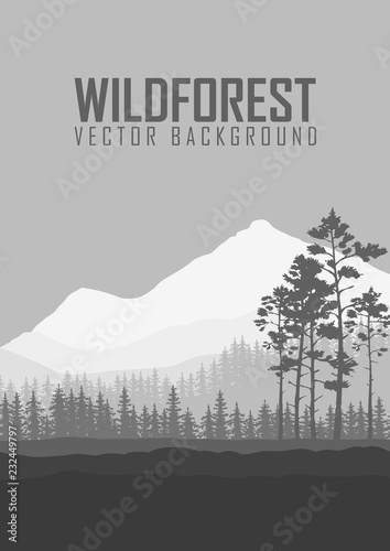 Fototapeta Wild coniferous forest flyer background. Pine tree, landscape nature, wood natural panorama. Outdoor camping design template. Vector illustration obraz na płótnie