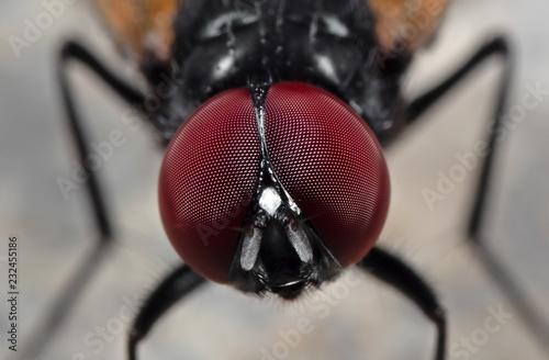 In de dag Macrofotografie Macro Photo of Eyes of Noon Fly on The Floor