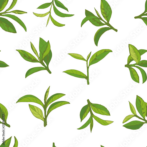 Canvas Prints Condiments seamless pattern with green tea, hand-drawn leaves and branches of tea