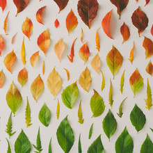 Creative Pattern Of Colorful Autumn Or Fall Leaves. Flat Lay, Top View. Changing Season Concept. Nature Composition.