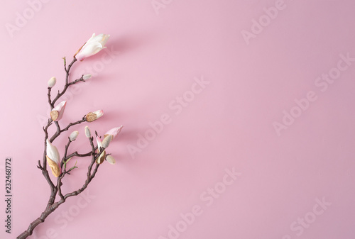 Obraz White and pink flowers on pastel pink background. Minimal flat lay top view composition. - fototapety do salonu