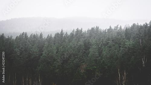 Fototapeten Wald landscape