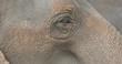 Extreme Close-Up of Adult Asian Elephant Eye