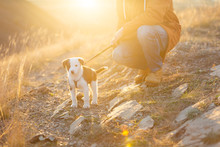Man And Dog In The Sunset Light On The Walk