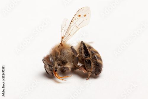 Apiculture - disparition des abeilles Wallpaper Mural