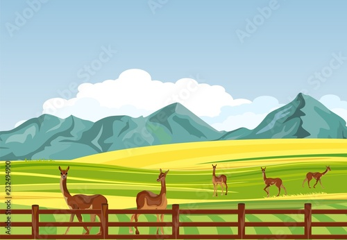 Lama south american animals in the farmland, vector countryside natural landscape.