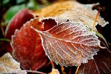 Frozen Autumn Natural Close Up...