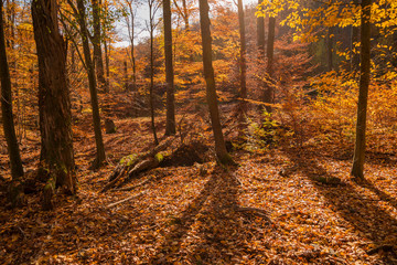 beautiful autumn nature scenes in Hungary on hiking trails