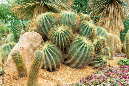 Staande foto Cactus 密集するサボテン