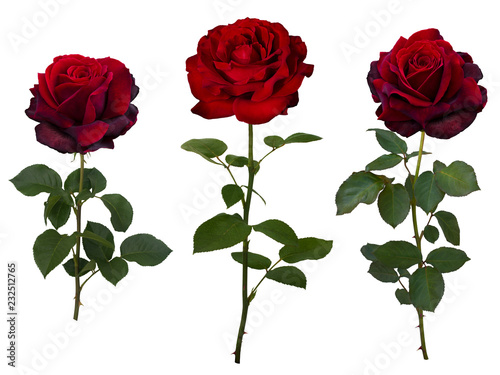 Collage of dark red rose with green leaves