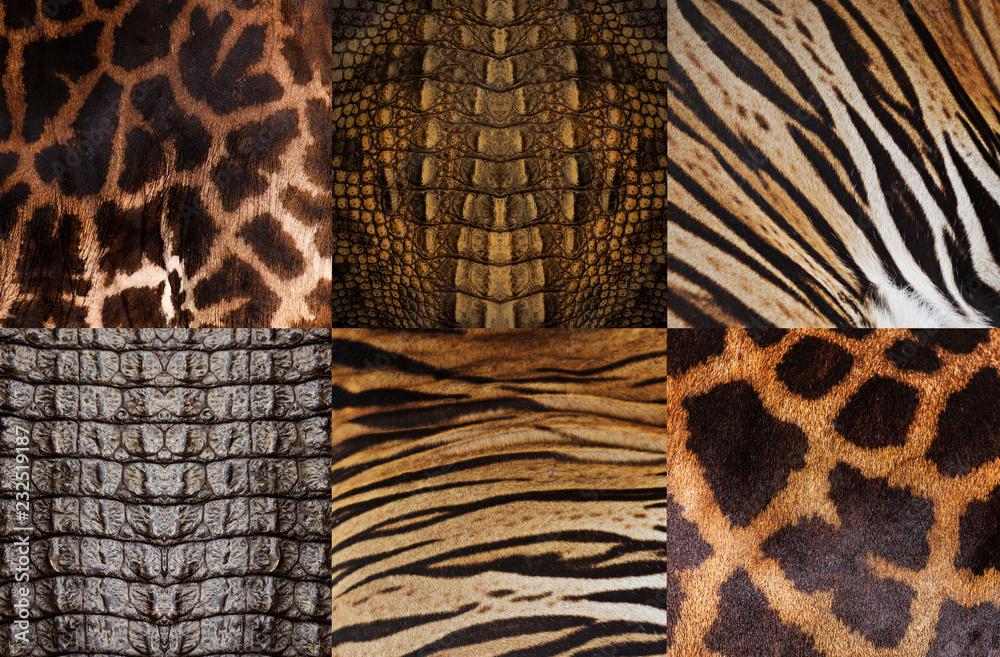 Fototapeta Animal skin background, Tiger, Crocodile, Giraffe