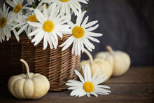 Original Autumn Style Photograph Of White Shasta Daisies In A Basket With White Pumpkins