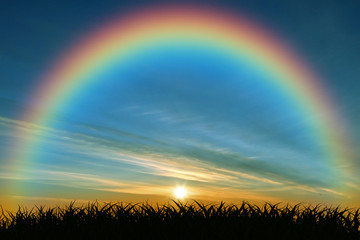 The rainbow at sunset in the bush isolated