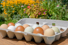 Farm Fresh Eggs In A Variety Of Natural Earth Tone Colors