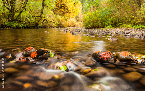 Fotobehang Bos rivier Autumn leaves in South Fork Silver Creek stuck to the rocks and golden color reflecting on the water