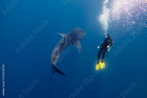 Fotografie, Obraz  whale shark
