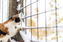 Calico Cat Outside On Deck Enjoying Fall Snow
