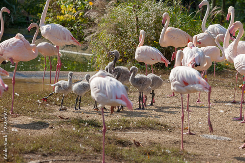 Tuinposter Flamingo VIENNA, AUSTRIA - OCTOBER 08, 2018: Schonbrunn Zoo. Flamingo