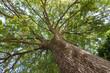 Leinwanddruck Bild - Blick in die grüne Baumkrone einer Eiche