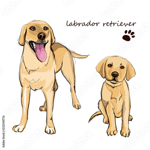 Poster Dogs Labrador retriever adult dog and a puppy. Colorful dogs illustration in vector.