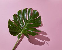 Isolated Palm Leaf